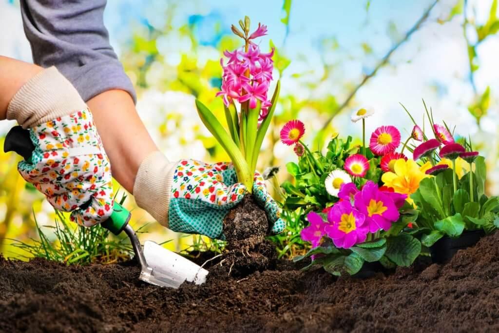心と体に効果的!園芸療法とは?